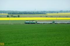 2009 - 05 09 - Králíčky, žluté pole, 141009, 18 a 58